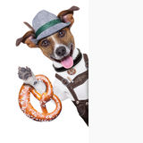 Oktoberfest dog. Smiling happy with bavarian pretzel bread besides a white blank banner or placard stock photo