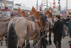 Oktoberfest hästar Royaltyfria Bilder