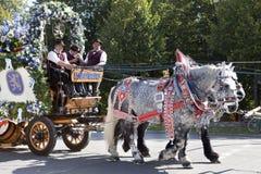Oktoberfest hästar som drar vagnen Royaltyfria Bilder