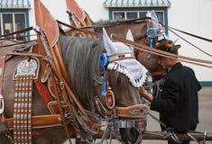 Oktoberfest Horses2 Arkivbild
