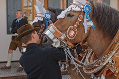 Oktoberfest Horses3 Royaltyfri Fotografi