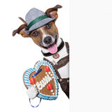 Oktoberfest-Hund lizenzfreies stockfoto
