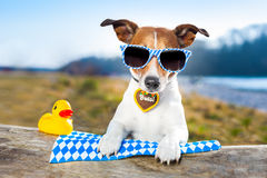 Oktoberfest-Hund stockfotografie
