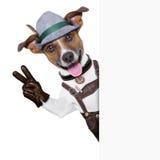 Oktoberfest Hund lizenzfreie stockfotografie