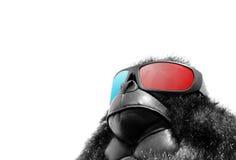 Okulary przeciwsłoneczni małpa Zdjęcia Royalty Free