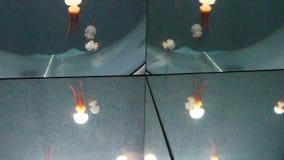 Okulistyczny złudzenie ośmiornica zdjęcie wideo