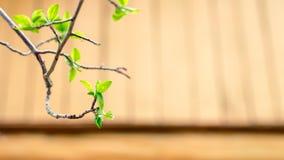Okulizowanie wiosny liście zaświecający słońce promieniami Obraz Royalty Free