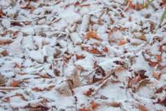 Okurzanie śnieg na Jesiennych liściach zdjęcie royalty free