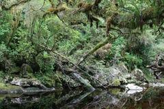 okuvad djungel Royaltyfri Foto