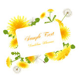 okwitnięć dandelion rama Zdjęcia Stock