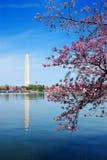 okwitnięcia czereśniowy dc festiwal Washington Zdjęcie Royalty Free
