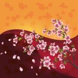okwitnięcia czereśniowy japoński Sakura drzewo Obrazy Stock