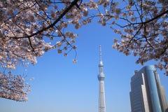 okwitnięcia czereśniowy nieba Tokyo drzewo Obrazy Royalty Free