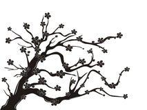 okwitnięcia czereśniowy sylwetki drzewo ilustracja wektor