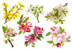 Okwitnięcia jabłoń, czereśniowa gałązka, forsycje Set wiosna fl zdjęcia stock