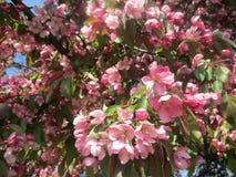 Okwitnięcia menchie i liście zieleń zdjęcia royalty free