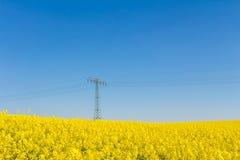 Okwitnięcia oilseed gwałta pole w wiośnie z pilonem Fotografia Stock