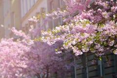 okwitnięcia piękny drzewo Natury scena z słońcem na słonecznym dniu wiosna kwiat Abstrakta zamazany tło w wiośnie Obraz Stock