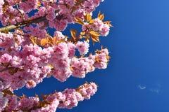 okwitnięcia piękny drzewo Natury scena z słońcem na słonecznym dniu wiosna kwiat Abstrakta zamazany tło w wiośnie Obrazy Stock