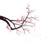 okwitnięcia rozgałęziają się śliwkowego drzewa Fotografia Royalty Free