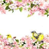 Okwitnięcia Sakura różowi kwiaty i pieśniowi ptaki Kwiecista karta lub puste miejsce akwarela Fotografia Stock
