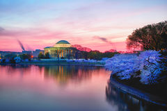 okwitnięcia wiśni wschód słońca zdjęcia stock