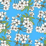 okwitnięcia wiśni wzór bezszwowy Kwiecisty projekt dla textil Zdjęcie Stock