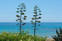 Okwitnięcie agawy roślina na tropikalnej wyspie z błękita jasnego morza wa Fotografia Royalty Free