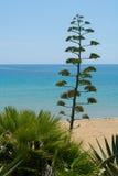 Okwitnięcie agawy roślina na tropikalnej wyspie z błękita jasnego morza wa Zdjęcia Stock
