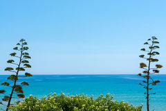 Okwitnięcie agawy roślina na tropikalnej wyspie z błękita jasnego morza wa Zdjęcia Royalty Free