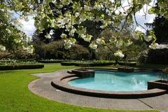 Okwitnięcie biała jabłoń kwitnie przy przedpolem Zdjęcie Royalty Free