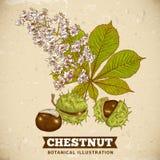 Okwitnięcie Cisawa Botaniczna Wektorowa ilustracja Fotografia Stock