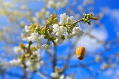 Okwitnięcie gałąź i Easter jajko Obraz Stock