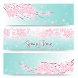 Okwitnięcie Sakura lub wiśni karty sztandarów błękitny kwiatów zieleni menchii wiosna royalty ilustracja