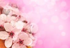 okwitnięcie wiosna zdjęcia stock