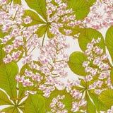 Okwitnięcie wiosny Cisawy Bezszwowy tło ilustracji