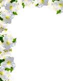 Okwitnięcia, kwiat rama Obrazy Royalty Free