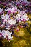 okwitnięcie kwiaty Zdjęcie Royalty Free