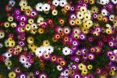 Okwitnięcie kwiaty Obrazy Stock