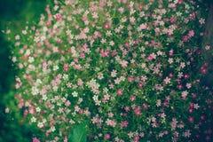 Okwitnięcie kwiaty Obraz Royalty Free