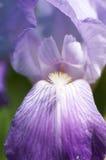 okwitnięcie orchidea Zdjęcie Royalty Free