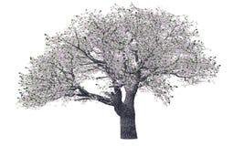 okwitnięcie wiosny drzewo Fotografia Stock