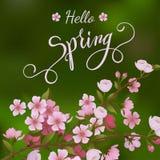Okwitnięcie wiosny i drzewa literowanie Fotografia Stock