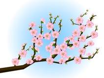 okwitnięcia czereśniowy orientalny obrazu wiosna styl Obraz Stock