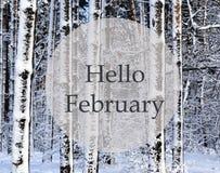 Olá! fevereiro Floresta do inverno coberta com a neve Árvores nevados após uma queda de neve imagem de stock royalty free
