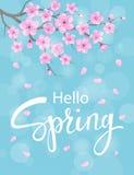 Olá! fundo da mola com flores das flores de cerejeira Imagens de Stock Royalty Free
