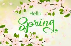 Olá! fundo da mola com flores de cerejeira Foto de Stock Royalty Free