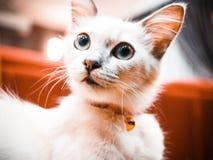 Olá! gato do cutie fotos de stock royalty free