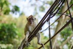 Olá! macaco Imagem de Stock Royalty Free