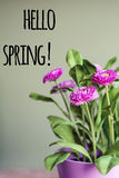 Olá! mensagem da mola com flores cor-de-rosa bonitas Imagens de Stock
